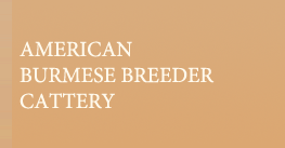 AMERICAN BURMESE BREEDER REFERRAL