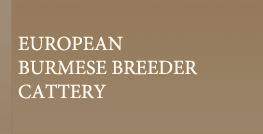 EUROPEAN BURMESE BREEDER REFERRAL